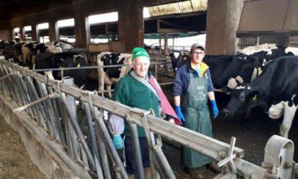 """Raid in un allevamento nel Bresciano:  """"giustiziano"""" sei vacche gravide"""