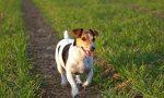 Topicida disseminato in paese cane salvo per miracolo