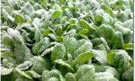 Maltempo, manna per campi lombardi dopo un inverno con piogge dimezzate