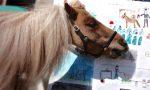 Un pony per maestro: a Patrick del Country ranch serve un nuovo trailer