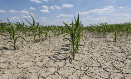 Crisi idrica: ecco la proposta dal tavolo di Regione Lombardia
