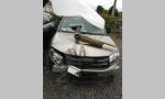 Auto infilzata dal palo nello scontro, autista miracolato