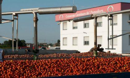 Pomodoro lombardo, è profondo rosso a causa del maltempo