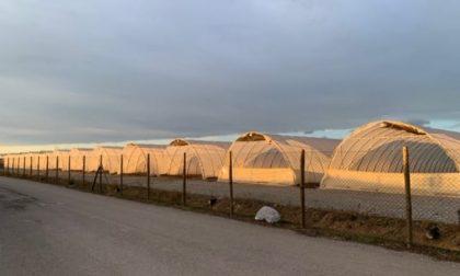 """Troppe serre in Lombardia, Legambiente contro il """"Far west dell'agricoltura"""""""