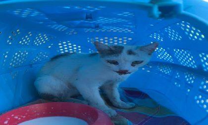Strage alla colonia felina di Spino, avvelenamento di massa?