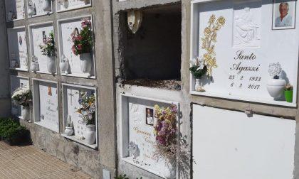 Api, vespe o calabroni al cimitero di Gradella? Scoppia la polemica FOTO