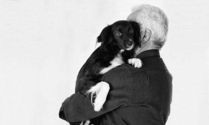 È ufficiale: cure veterinarie gratuite per gli animali d'affezione degli anziani