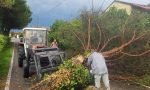 Bufera, ad Agnadello un albero si schianta sul viale del cimitero FOTO