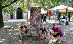 Dopo le torture in Spagna la cagnolina Leia cerca casa in Italia