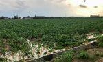 Bufera sulla Bassa, danni ingenti per l'agricoltura