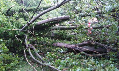 Maltempo a Rivolta, devastato il cortile del ristorante sul fiume
