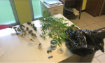 Marijuana sul balcone, denunciato 61enne