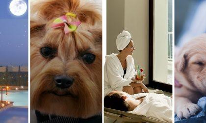 Simpatiche Zampette: dalla SPA al veterinario gratis, ecco tutti i premi