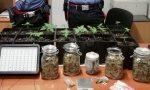 In salotto una serra di marijuana, arrestato operaio 32enne