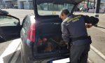 Dogana svizzera, cane poliziotto fiuta… banconote
