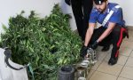 Aveva una serra di marijuana in casa
