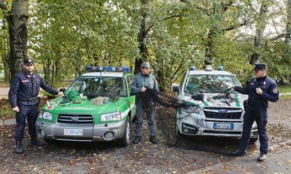 Attività illegale di uccellagione: denunciati due bracconieri