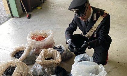 Sacchi con scarti in gomma abbandonati vicino la parco e sequestrati dai carabinieri