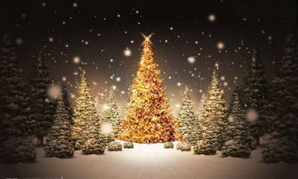 Ladri di lampadine spengono le luci dell'albero di Natale