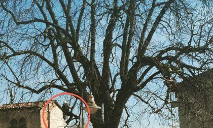 Taglio degli alberi a Cologno, si ricorre alla tecnica del tree climbing