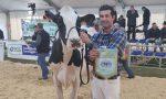 Sant'Apollonia 2020, ecco le migliori vacche di razza frisona