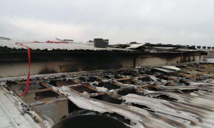 Brucia il tetto del capannone, paura per 6mila maialini