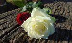 """Festa della mamma, l'appello di Rolfi: """"Acquistate fiori nei vivai lombardi"""""""