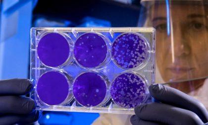 Anticorpi anti Covid-19 nei donatori di sangue abituali, al via indagine epidemiologica