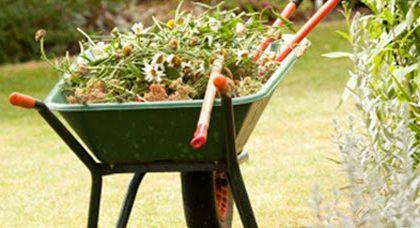 Sistemano il giardino di casa ma con la terra dell'aiuola comunale