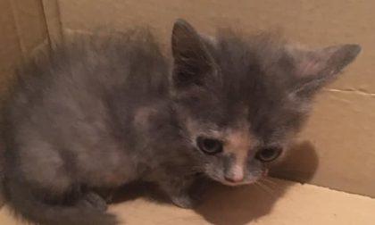 Gattini abbandonati: due salvataggi nell'arco di poche ore