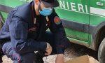 Cremona: i Carabinieri Forestali di Crema salvano una tartaruga