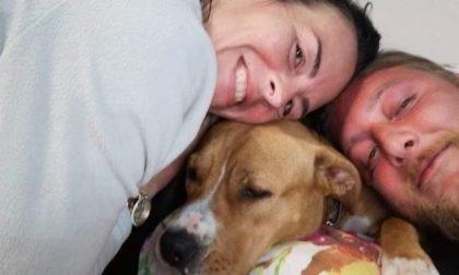 Si sente male sull'alzaia della Muzza e viene salvato dal veterinario: cane avvelenato?