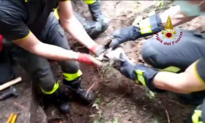 Gattino intrappolato in un tubo... all'Università IL VIDEO DEL SALVATAGGIO