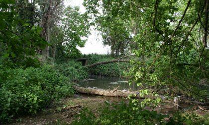 Fontanile Brancaleone, arriva i fondi per sistemare il bosco