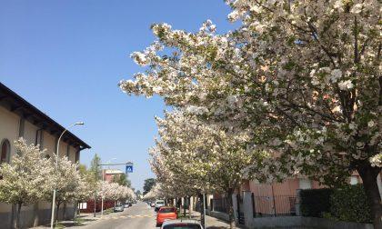 Treviglio, in arrivo 350 nuovi alberi in città, ecco dove