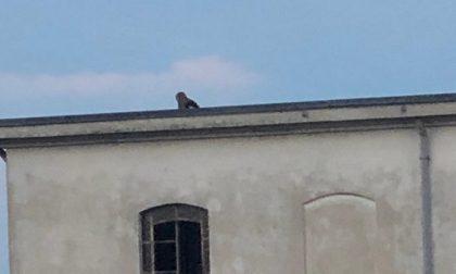 Ragazzi sul tetto dell'ex centrale dell'Enel per scattarsi un selfie