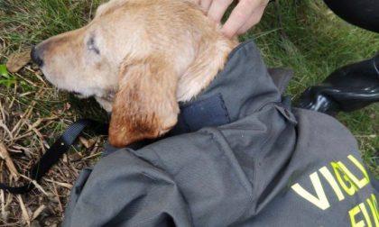 Scivola nel canale, cane salvato dai Vigili del fuoco FOTO