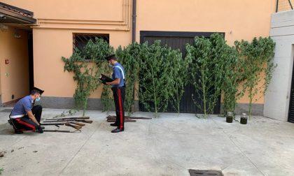 Litiga con il vicino, in casa gli trovano armi e droga: arrestato