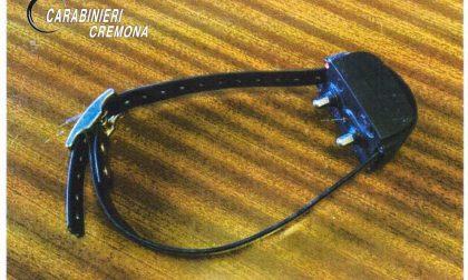 Fa indossare al cane un collare che emette scosse elettriche: denunciato cacciatore