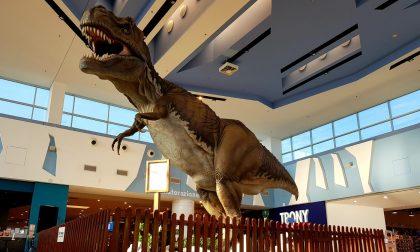 Ad Antegnate spunta un enorme T-Rex