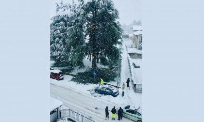 Neve, rami si schiantano e sfiorano le auto parcheggiate all'asilo