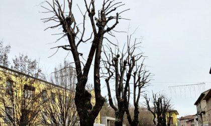Brignano, potature massicce in via Locatelli dopo i disagi causati dalla neve