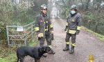 Il video del cane salvato dai pompieri dopo essere caduto in un canale
