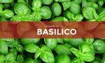 Tutti ortisti: in edicola con il Giornale di Treviglio i semi di basilico