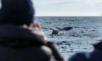 Al via il primo corso in Italia per avvistatori di balene