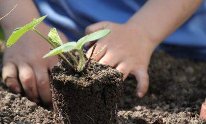 Tutti ortisti: in regalo con il tuo giornale, per otto settimane, le bustine con i semi
