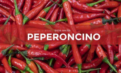 Tutti ortisti: in edicola con il Giornale di Treviglio i semi di peperoncino