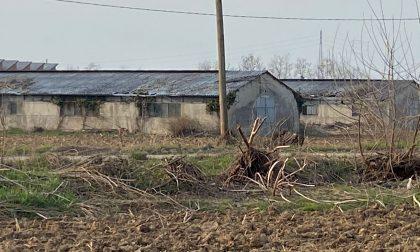 Cascina Spina, dopo il taglio degli alberi arriva l'interrogazione