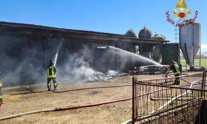 Incendio a Martinengo, dieci vitelli restano uccisi