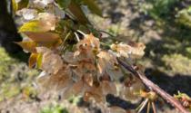 Siccità e gelo, a rischio il raccolto dell'agricoltura bergamasca